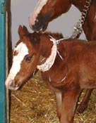 equine reproduction evaluation